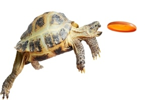 Slow Marketing: How to Deliver Faster Results by Slowing Down (Yes, You Read That Right)