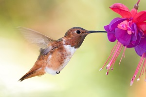 Do Keywords Matter in Google's Hummingbird World?