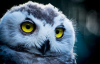 Now There's an Owl for That