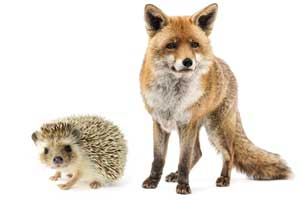 isaiah berlin hedgehog and the fox essay