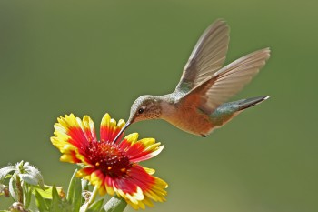 How Will Google's Hummingbird Update Affect Your Marketing?