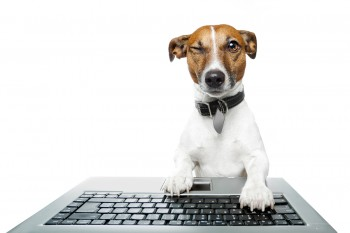 On the Internet, Marketers Now Know Whether You're a Dog