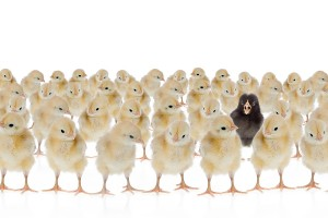 Why Branding Matters: Stand Out From the Rest of the Herd
