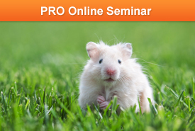 MarketingProfs University: Naked Mole Rats, Fluffy Hamsters, and the Universal Algorithm