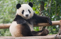 How to Make Google's Panda Update Work for You